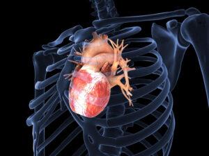 zemra rigjeneron veten