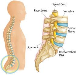 anatomia e shtylles